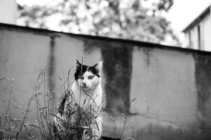 Beautiful cat expo-1